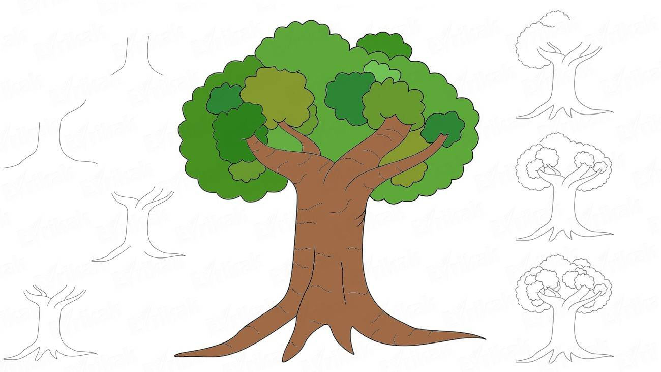 Comment dessiner un arbre à feuilles caduques (+ Coloriage)