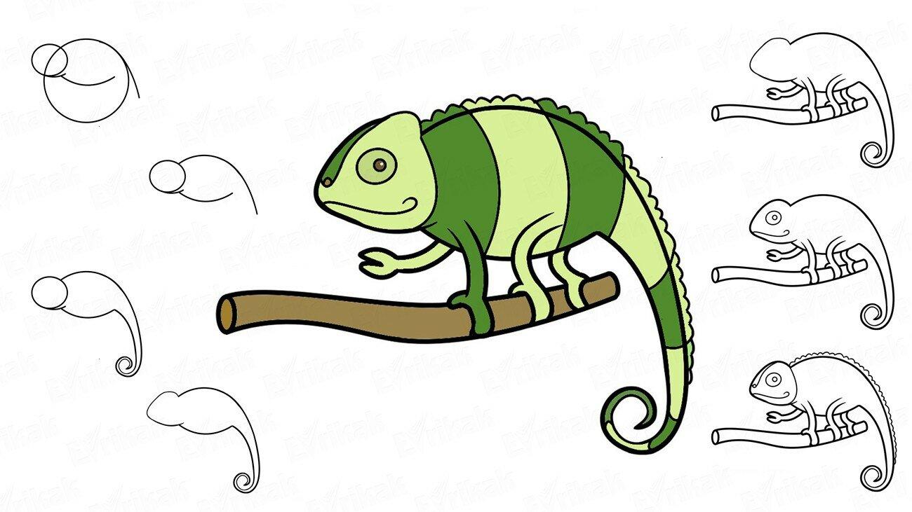 Comment dessiner un caméléon étape par étape (+ Coloriage)