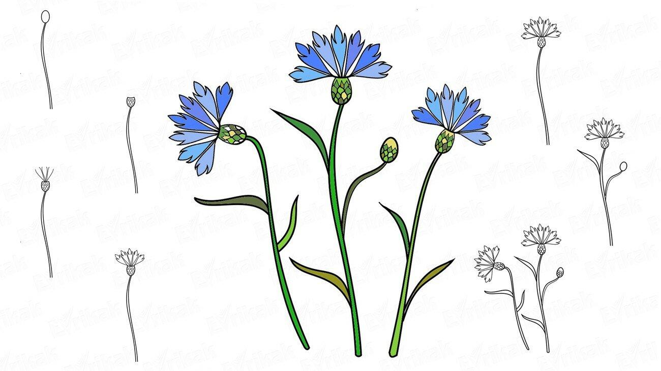 Comment dessiner un paysage de printemps au crayon progressivement - Coloriage fleur bleuet ...