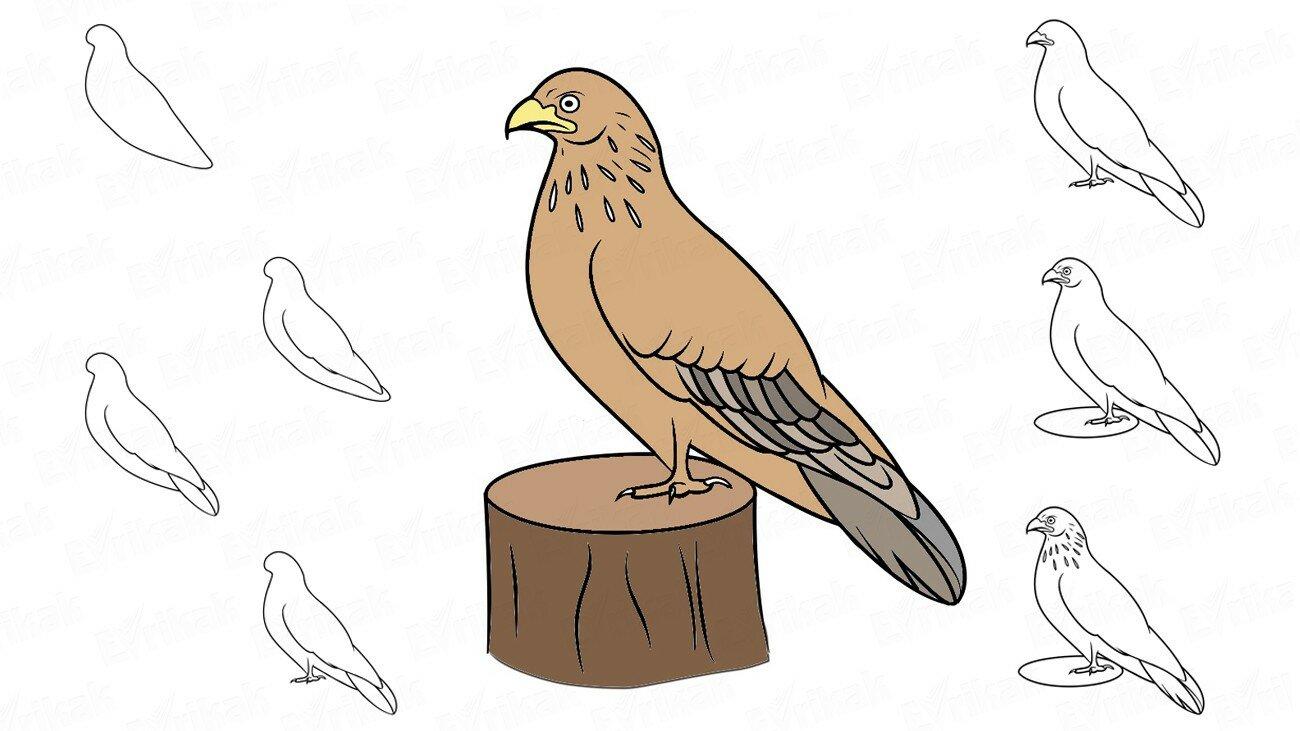 Apprenons à dessiner un faucon avec un enfant par étapes (+ Coloriage)
