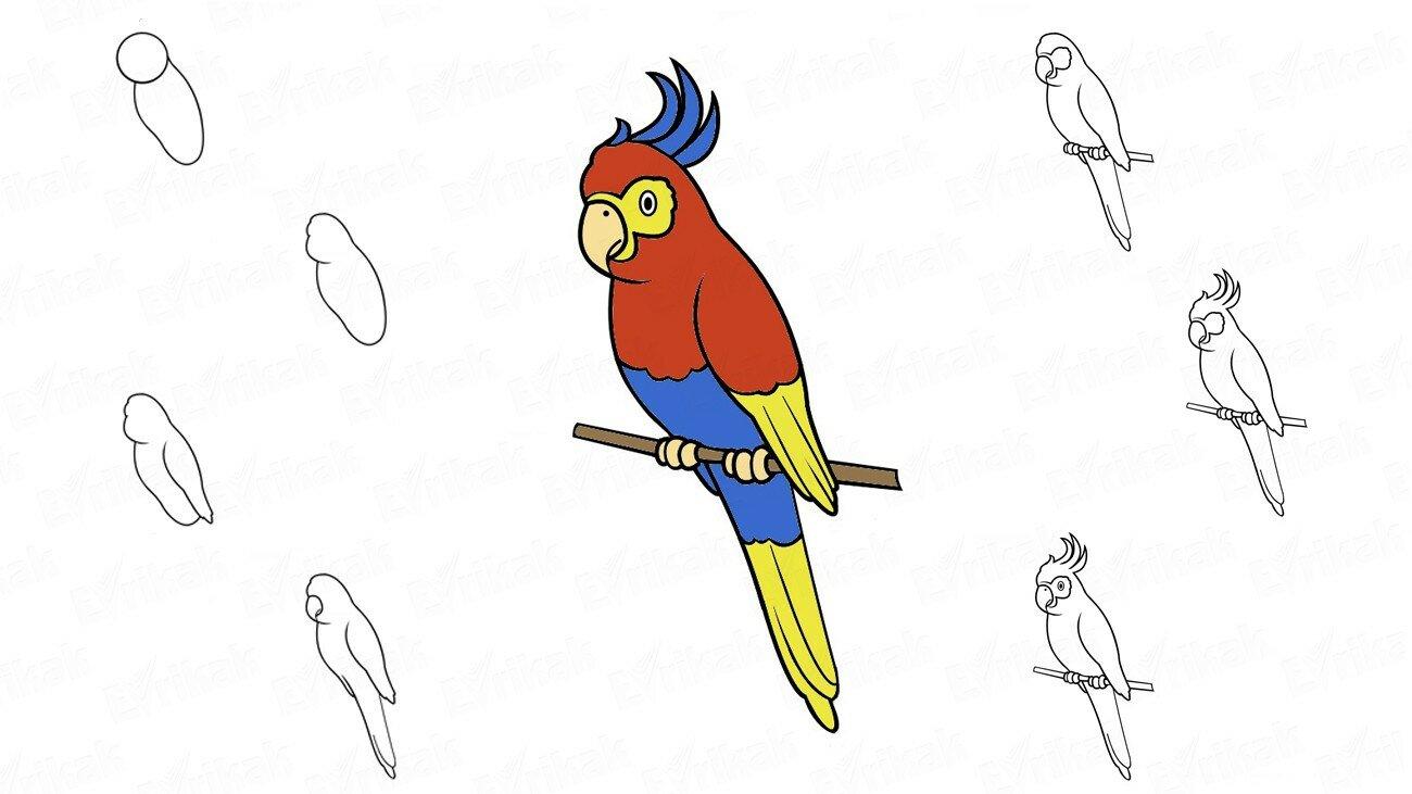 Apprenons à dessiner, étape par étape, un oiseau Cacatoès avec un enfant (+ Coloriage)
