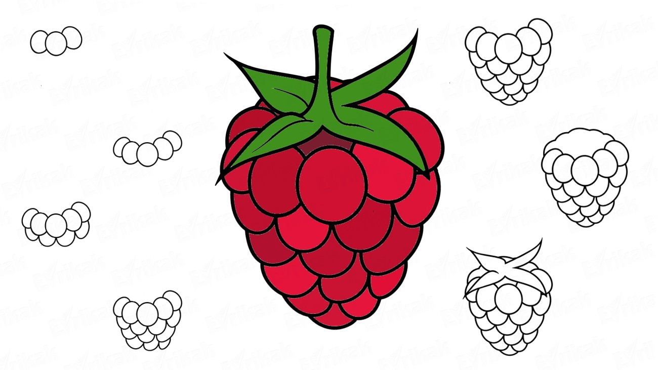 Apprenons à dessiner, pas à pas, une framboise (+ Coloriage)