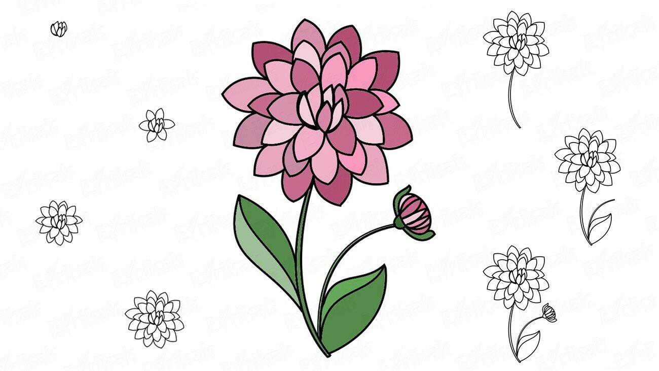 Apprenons à dessiner un dahlia, pas à pas, avec un crayon (+ Coloriage)