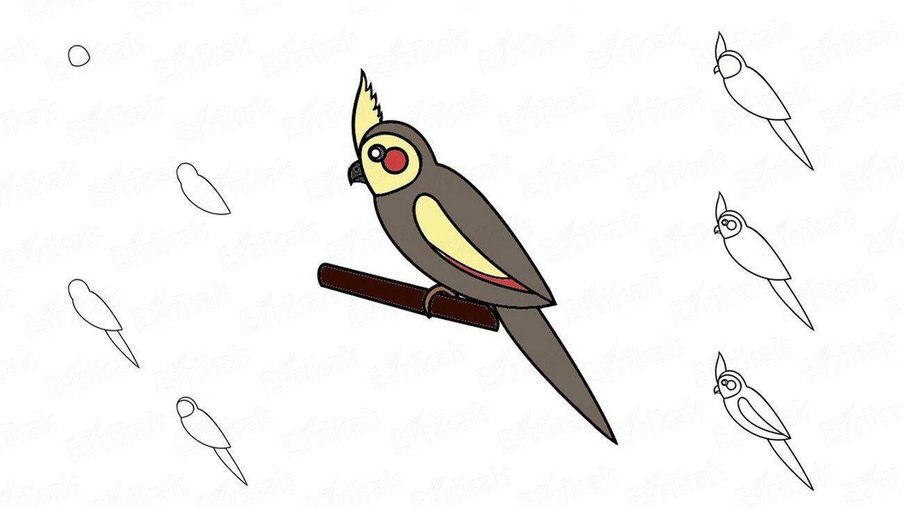 Apprenons à dessiner un perroquet Cockatiel au crayon (+ Coloriage)