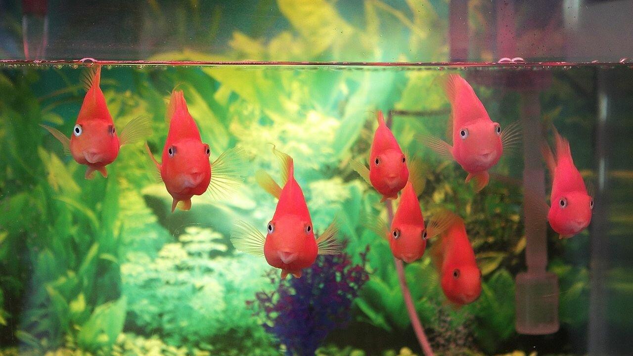 Comment faire un aquarium pour les poissons avec vos propres mains : instructions avec des photos de A à Z