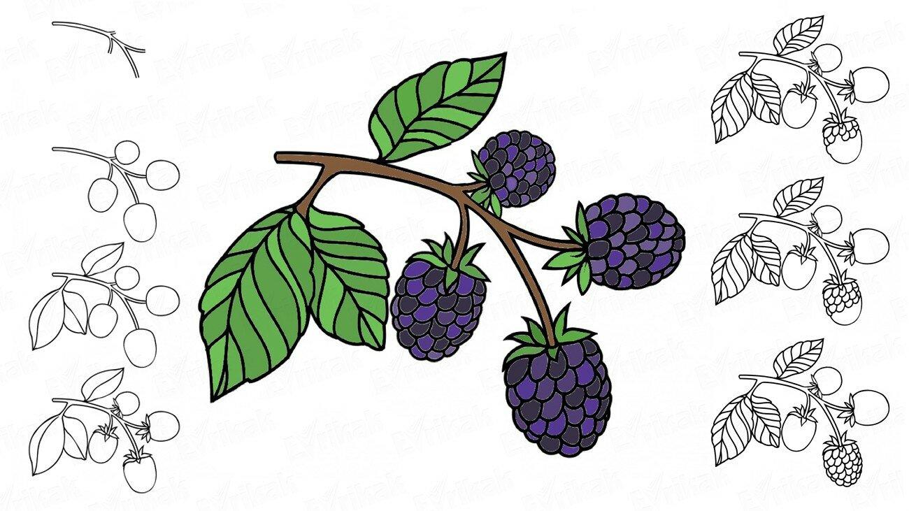 Apprenons à dessiner une branche de mûres par étapes avec un enfant !