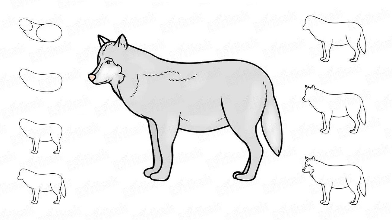 Apprenons à dessiner un loup avec un enfant, étape par étape !